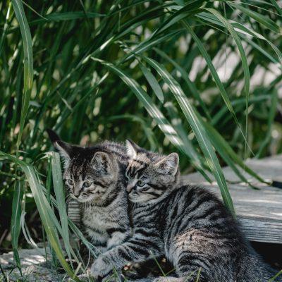 Unsere zwei Babykatzen