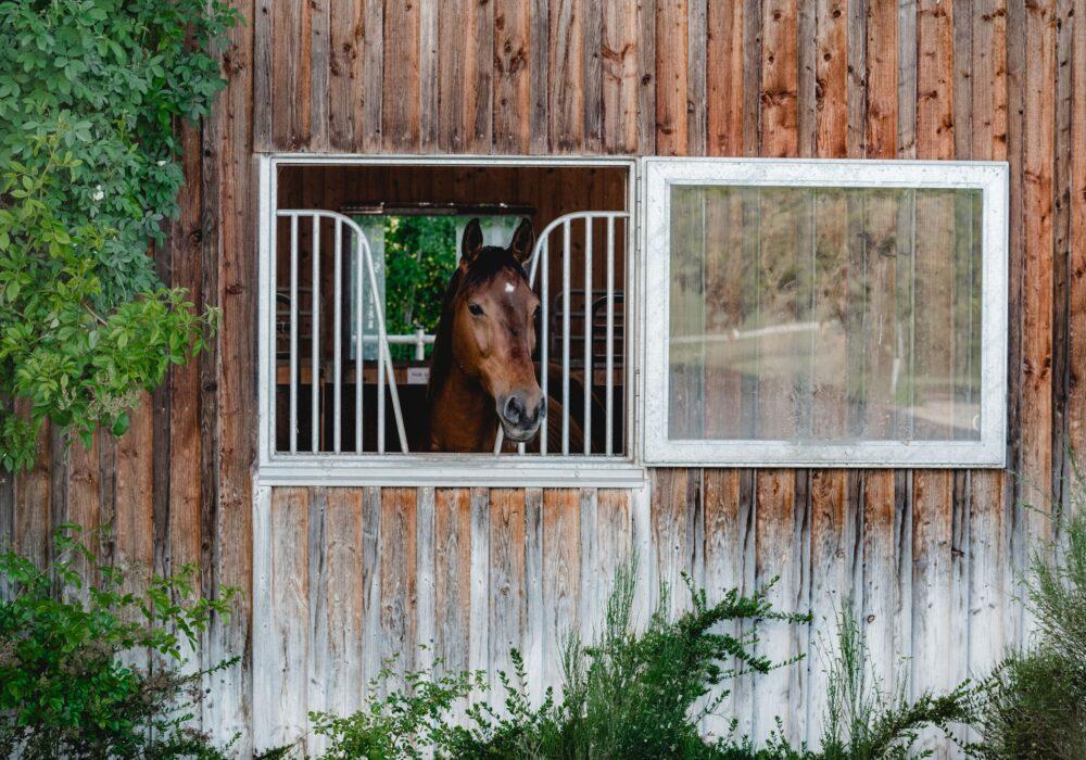 Unser Pferdestall